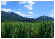 金ごま農園 風景写真