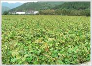 丹波黒豆農園 風景写真