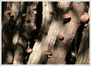 幻の椎茸栽培 風景写真